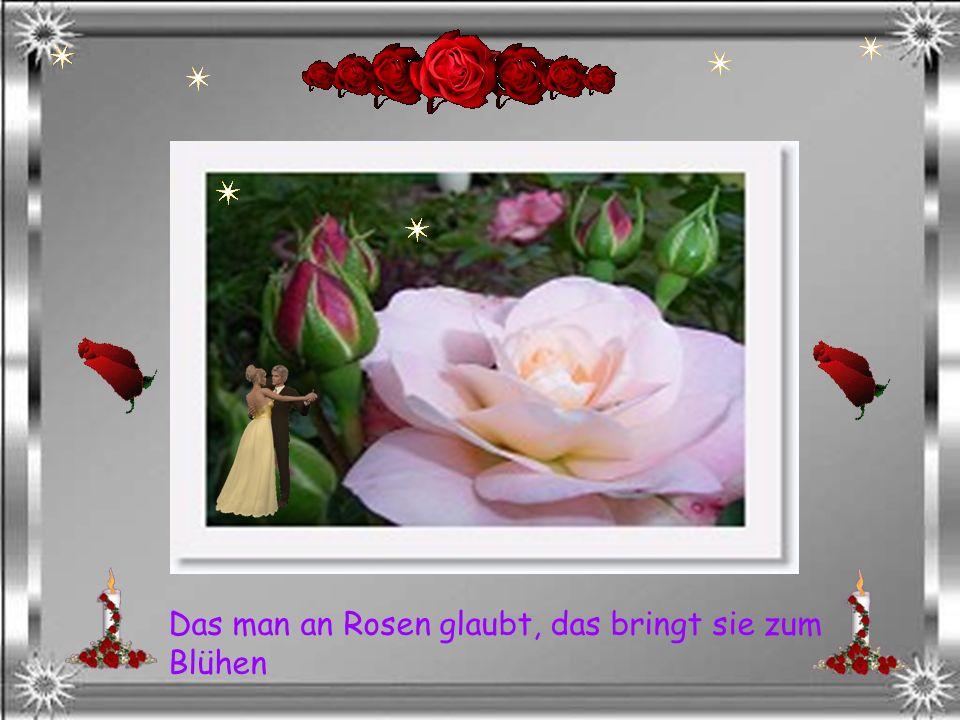 Das man an Rosen glaubt, das bringt sie zum Blühen