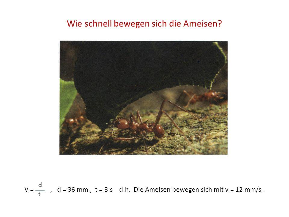 Wie schnell bewegen sich die Ameisen