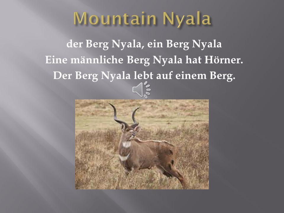 Mountain Nyala der Berg Nyala, ein Berg Nyala Eine männliche Berg Nyala hat Hörner.