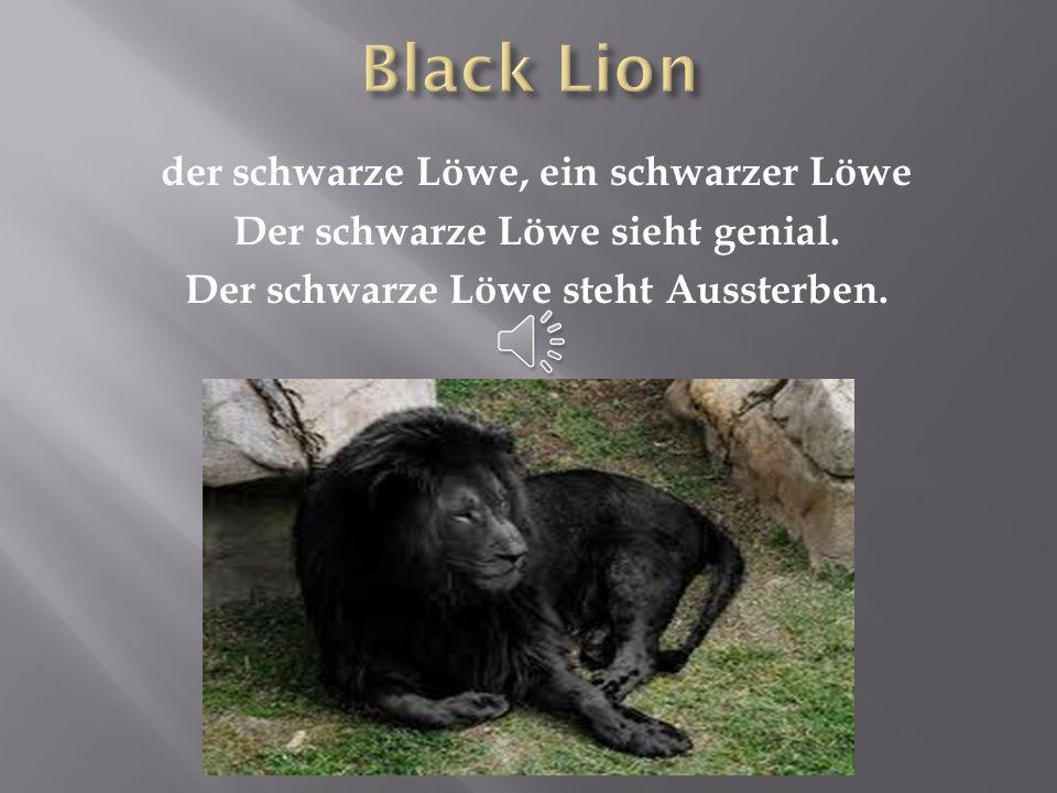 Black Lion der schwarze Löwe, ein schwarzer Löwe Der schwarze Löwe sieht genial.