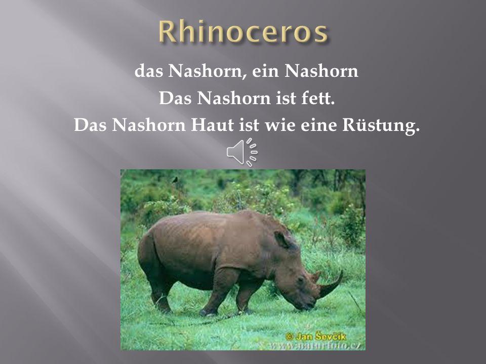 Rhinoceros das Nashorn, ein Nashorn Das Nashorn ist fett. Das Nashorn Haut ist wie eine Rüstung.