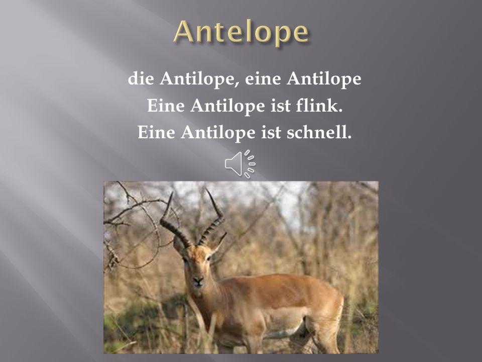 Antelope die Antilope, eine Antilope Eine Antilope ist flink. Eine Antilope ist schnell.