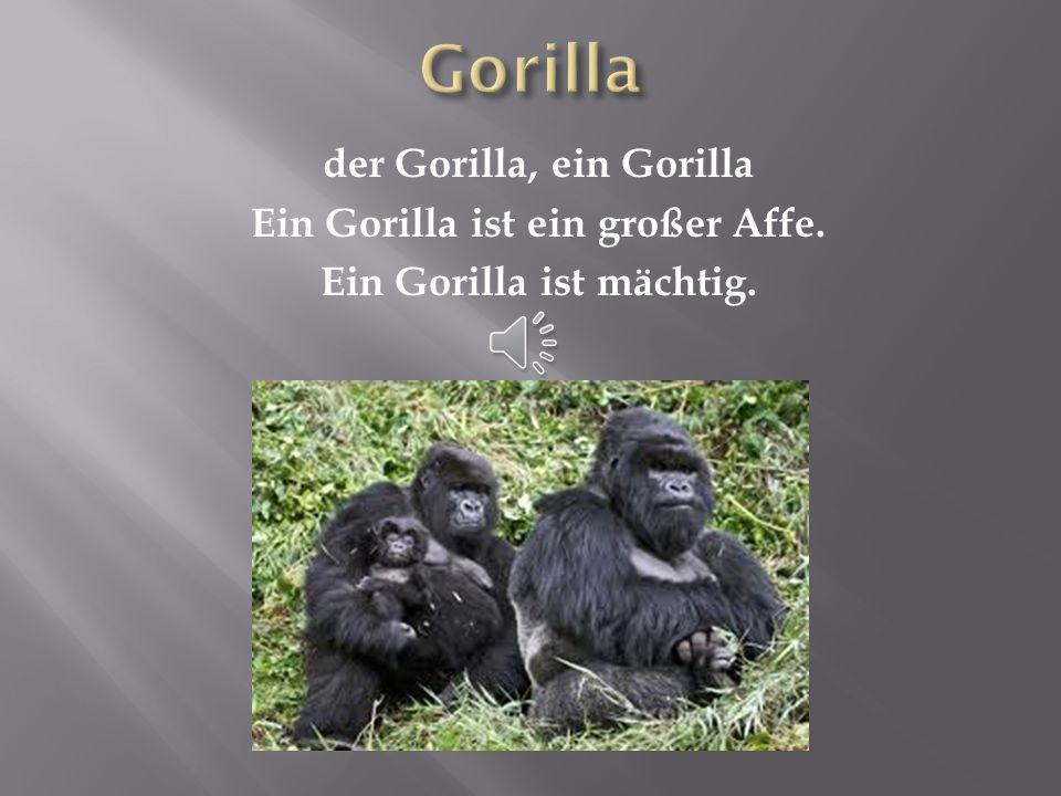 Gorilla der Gorilla, ein Gorilla Ein Gorilla ist ein großer Affe. Ein Gorilla ist mächtig.