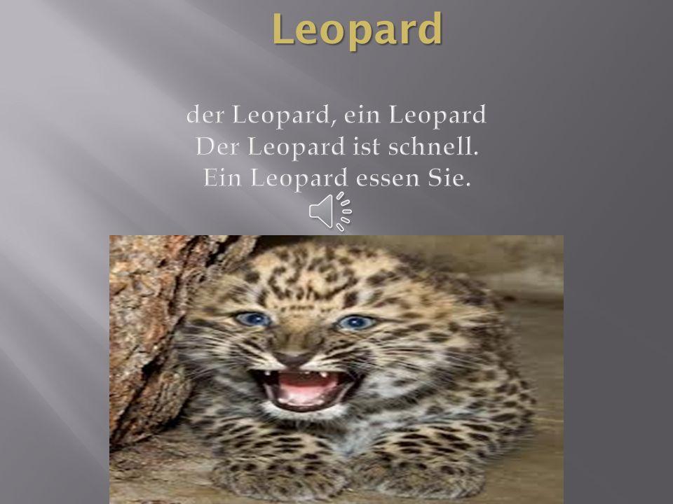 Leopard der Leopard, ein Leopard Der Leopard ist schnell. Ein Leopard essen Sie.
