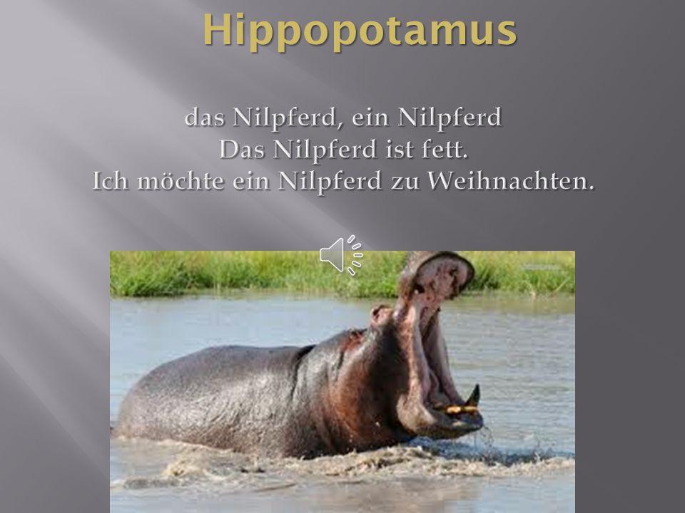 Hippopotamus das Nilpferd, ein Nilpferd Das Nilpferd ist fett.