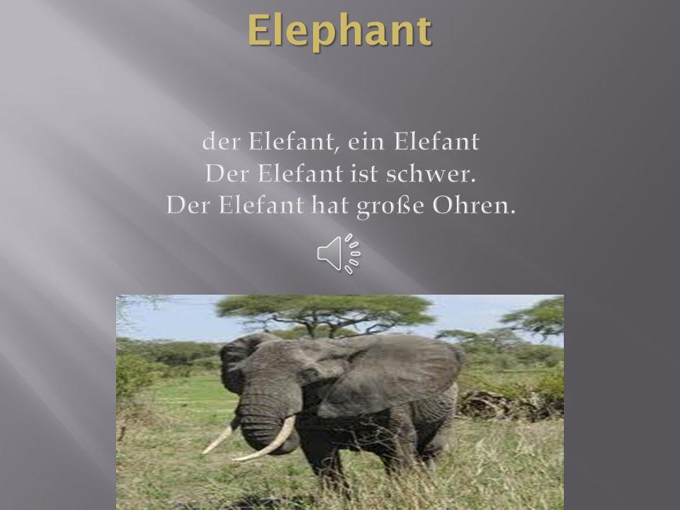 Elephant der Elefant, ein Elefant Der Elefant ist schwer. Der Elefant hat große Ohren.
