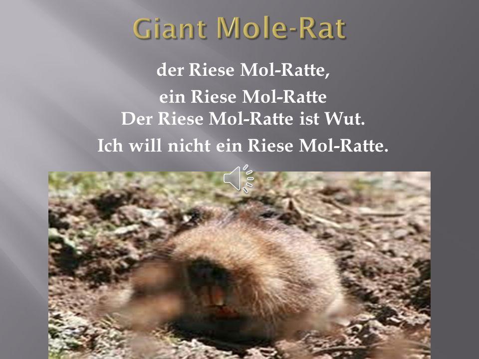 Giant Mole-Rat der Riese Mol-Ratte, ein Riese Mol-Ratte Der Riese Mol-Ratte ist Wut.