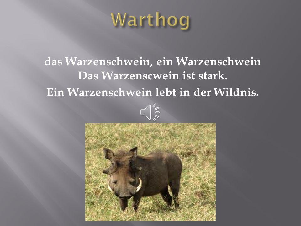 Warthog das Warzenschwein, ein Warzenschwein Das Warzenscwein ist stark.