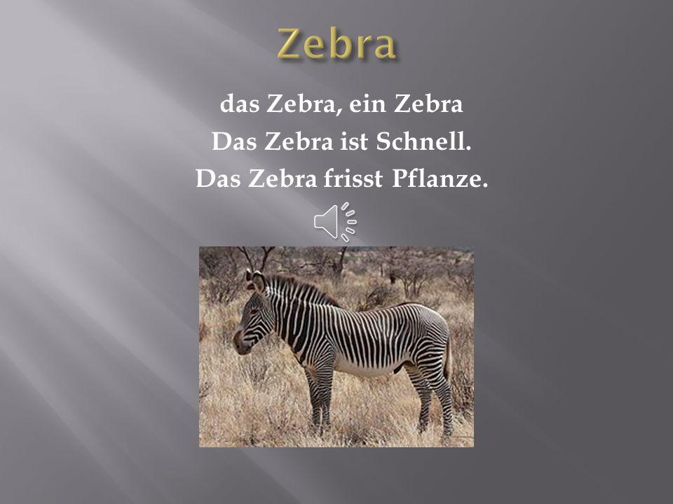 das Zebra, ein Zebra Das Zebra ist Schnell. Das Zebra frisst Pflanze.