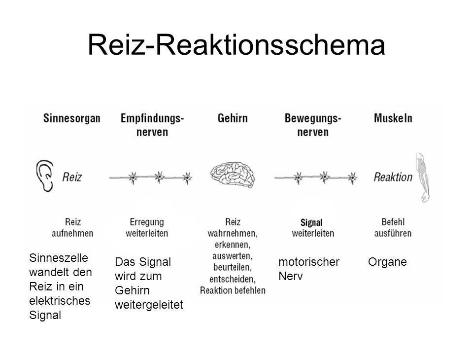 Reiz-Reaktionsschema
