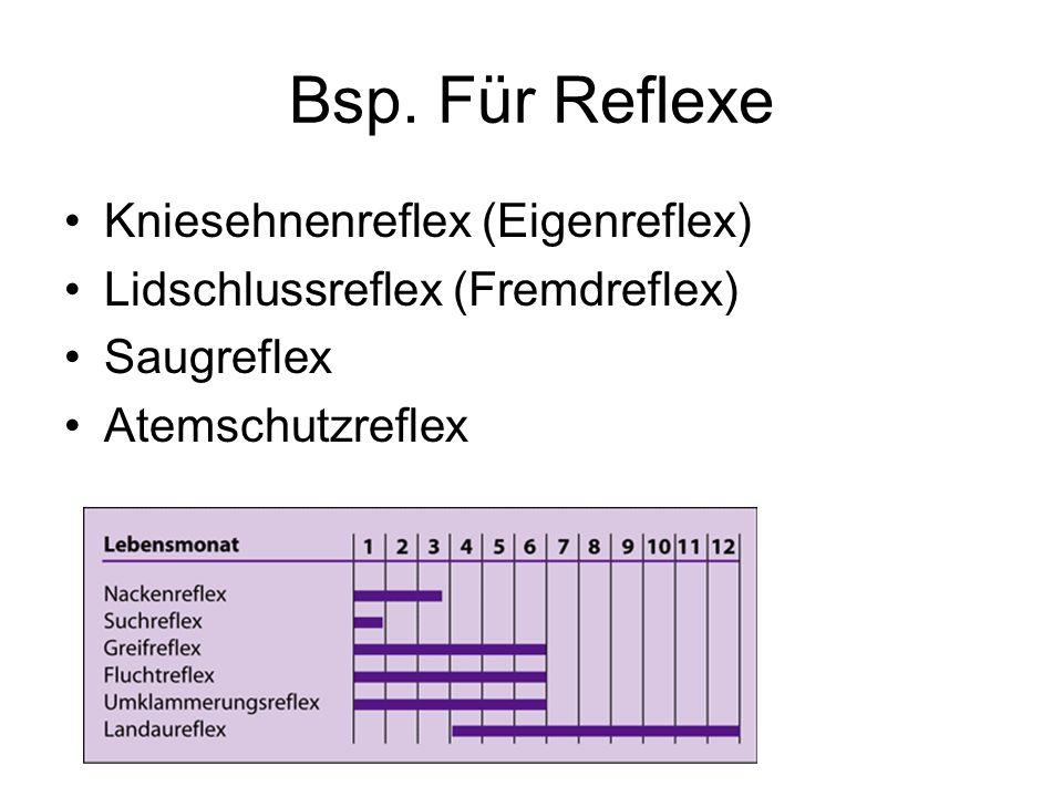 Bsp. Für Reflexe Kniesehnenreflex (Eigenreflex)