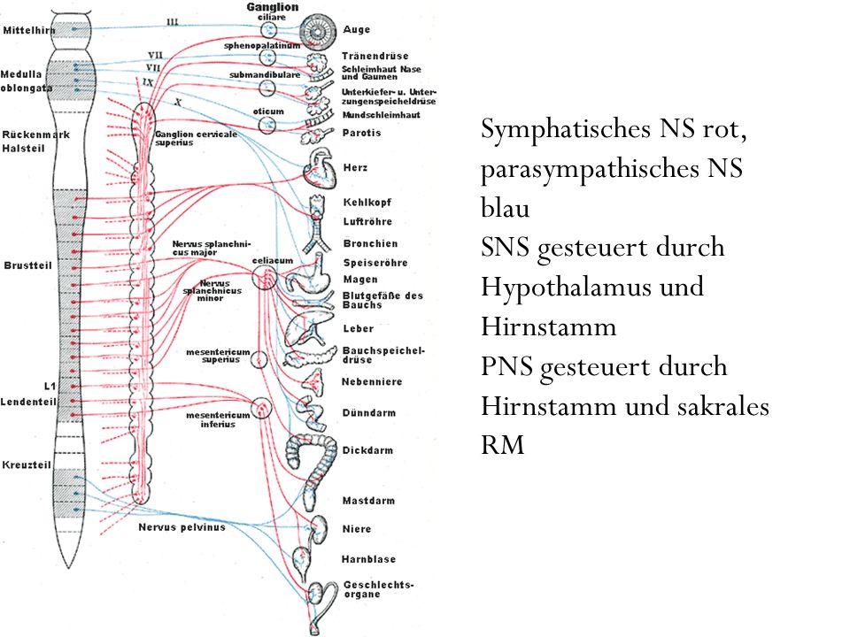 Symphatisches NS rot, parasympathisches NS blau