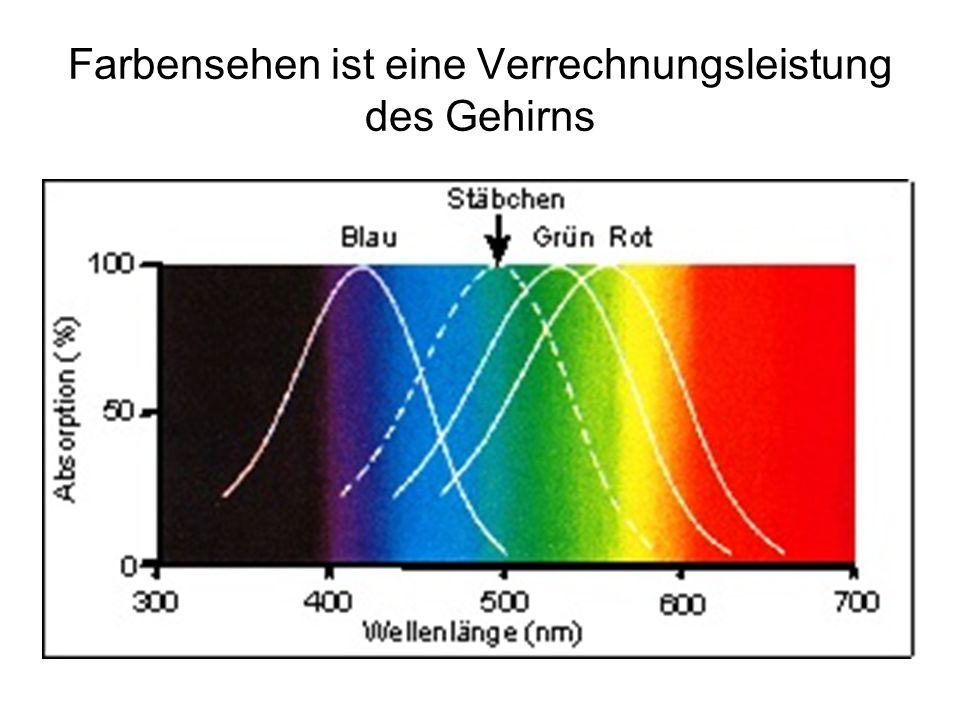 Farbensehen ist eine Verrechnungsleistung des Gehirns