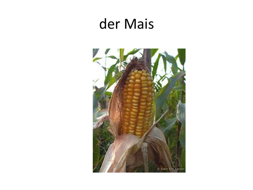 der Mais