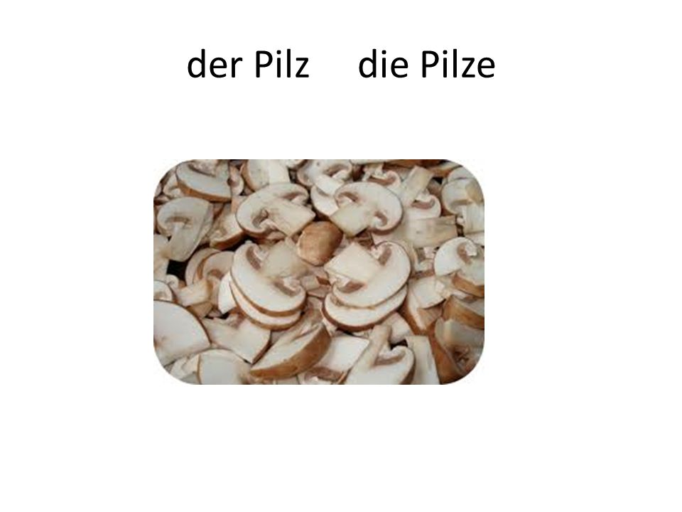 der Pilz die Pilze