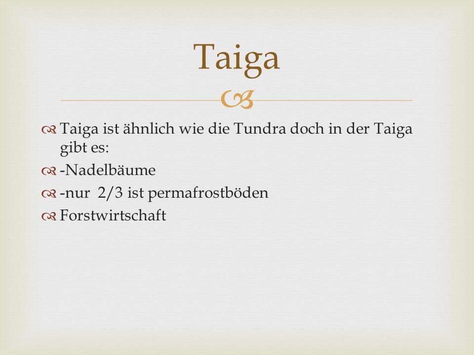 Taiga Taiga ist ähnlich wie die Tundra doch in der Taiga gibt es: