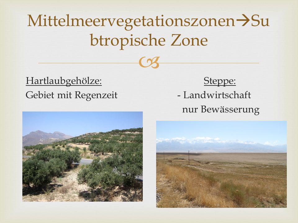 MittelmeervegetationszonenSubtropische Zone