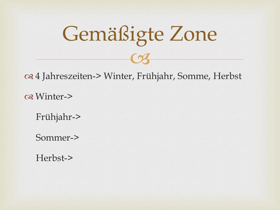 Gemäßigte Zone 4 Jahreszeiten-> Winter, Frühjahr, Somme, Herbst