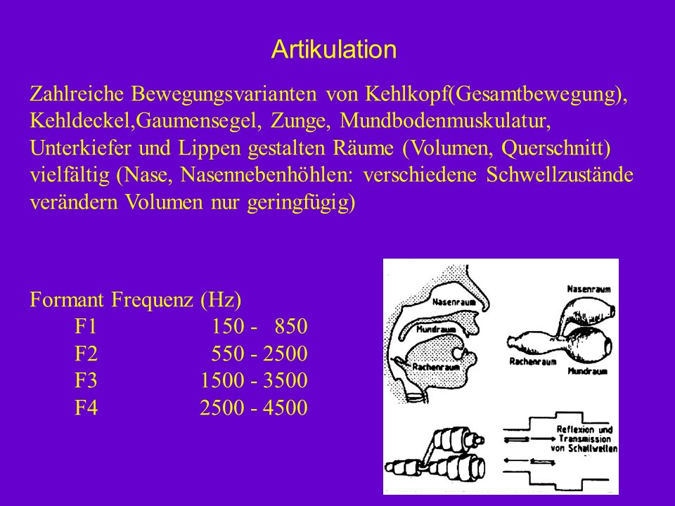Artikulation Zahlreiche Bewegungsvarianten von Kehlkopf(Gesamtbewegung), Kehldeckel,Gaumensegel, Zunge, Mundbodenmuskulatur,