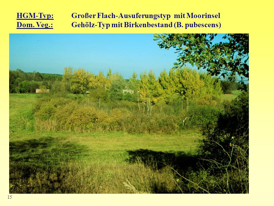 HGM-Typ: Großer Flach-Ausuferungstyp mit Moorinsel
