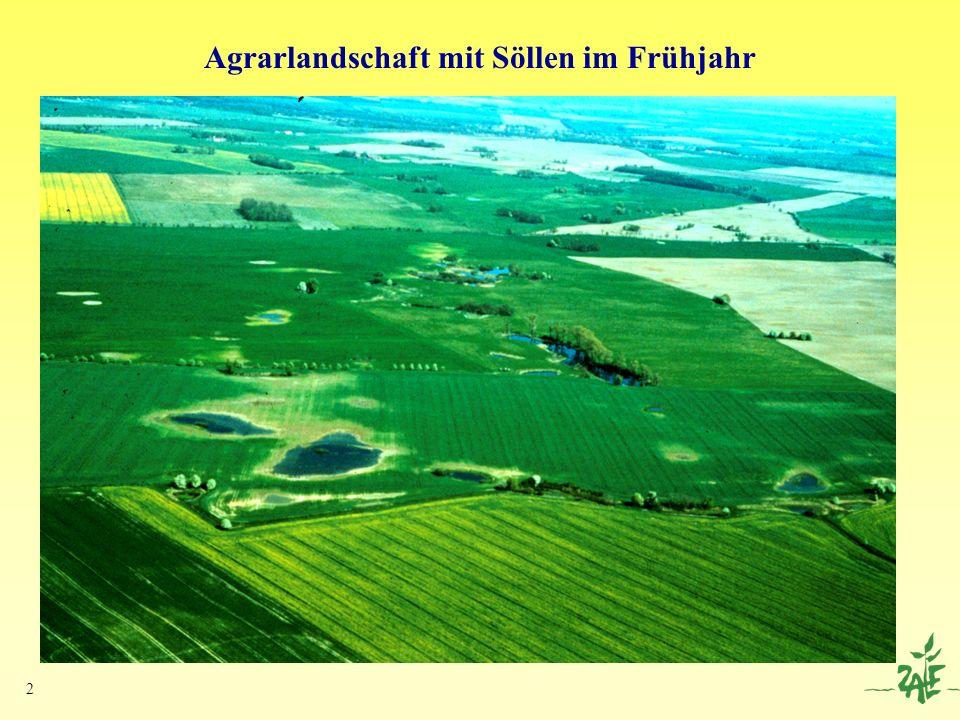 Agrarlandschaft mit Söllen im Frühjahr