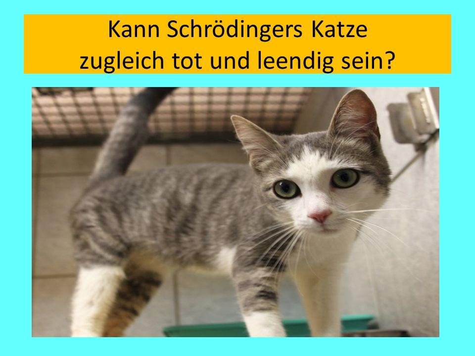 Kann Schrödingers Katze zugleich tot und leendig sein