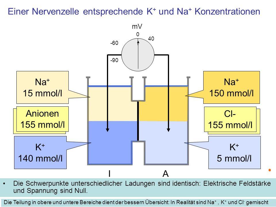 Einer Nervenzelle entsprechende K+ und Na+ Konzentrationen
