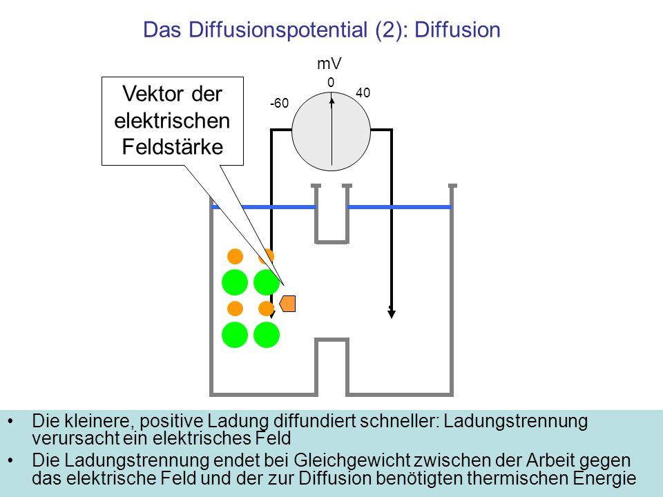 Das Diffusionspotential (2): Diffusion