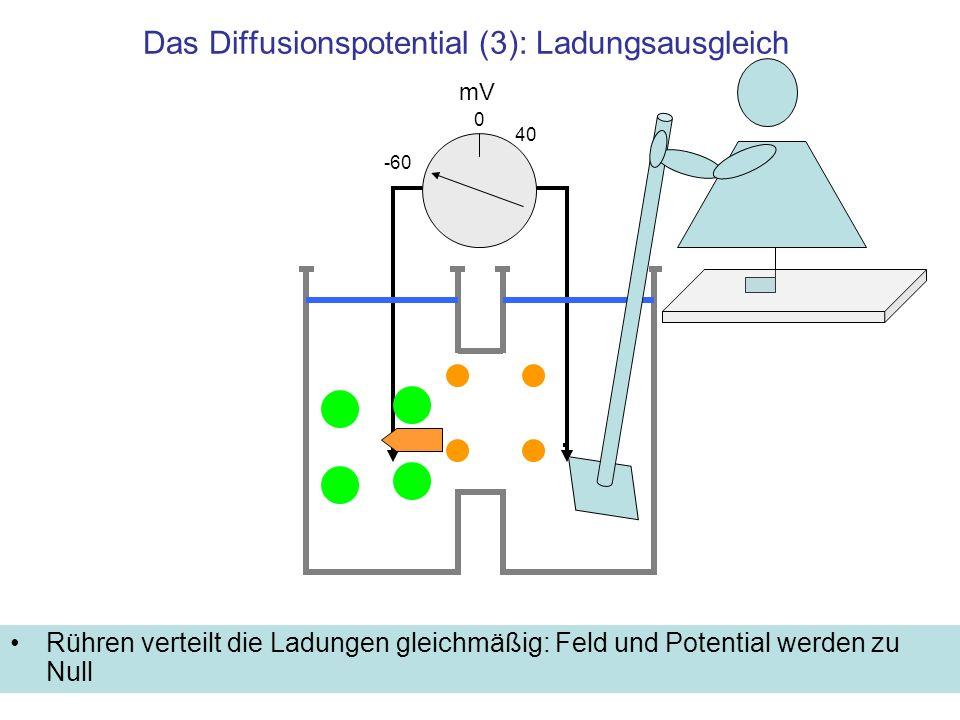 Das Diffusionspotential (3): Ladungsausgleich