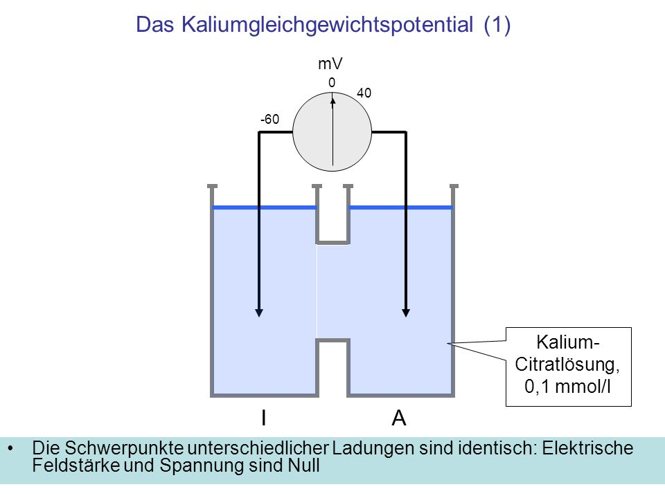 Das Kaliumgleichgewichtspotential (1)