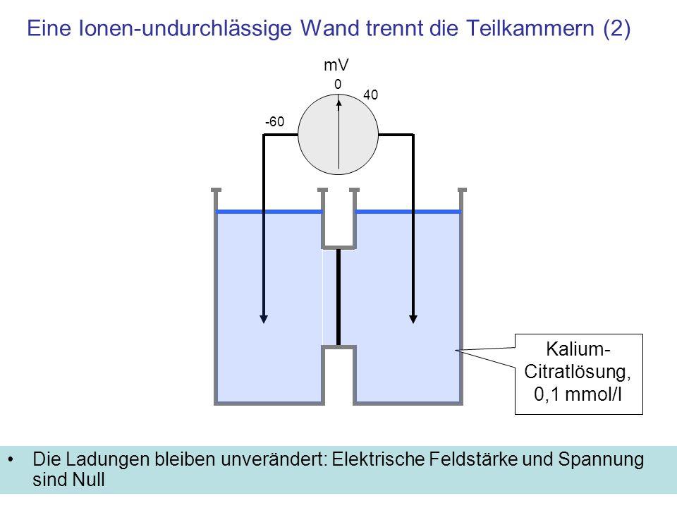Eine Ionen-undurchlässige Wand trennt die Teilkammern (2)