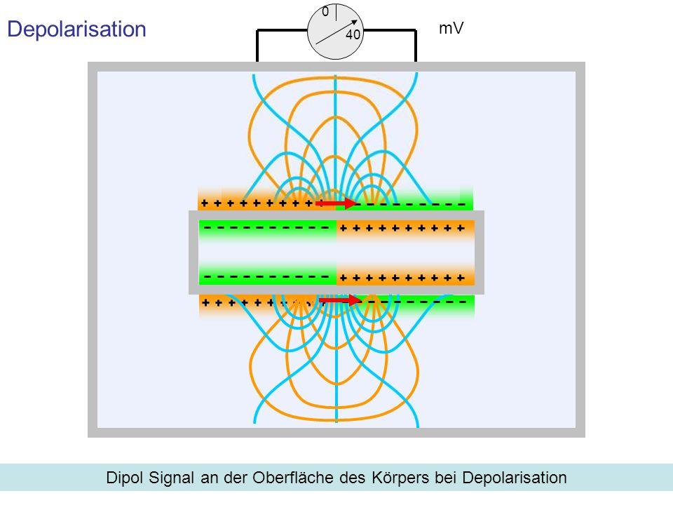 Dipol Signal an der Oberfläche des Körpers bei Depolarisation