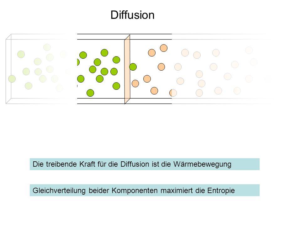 Diffusion Die treibende Kraft für die Diffusion ist die Wärmebewegung
