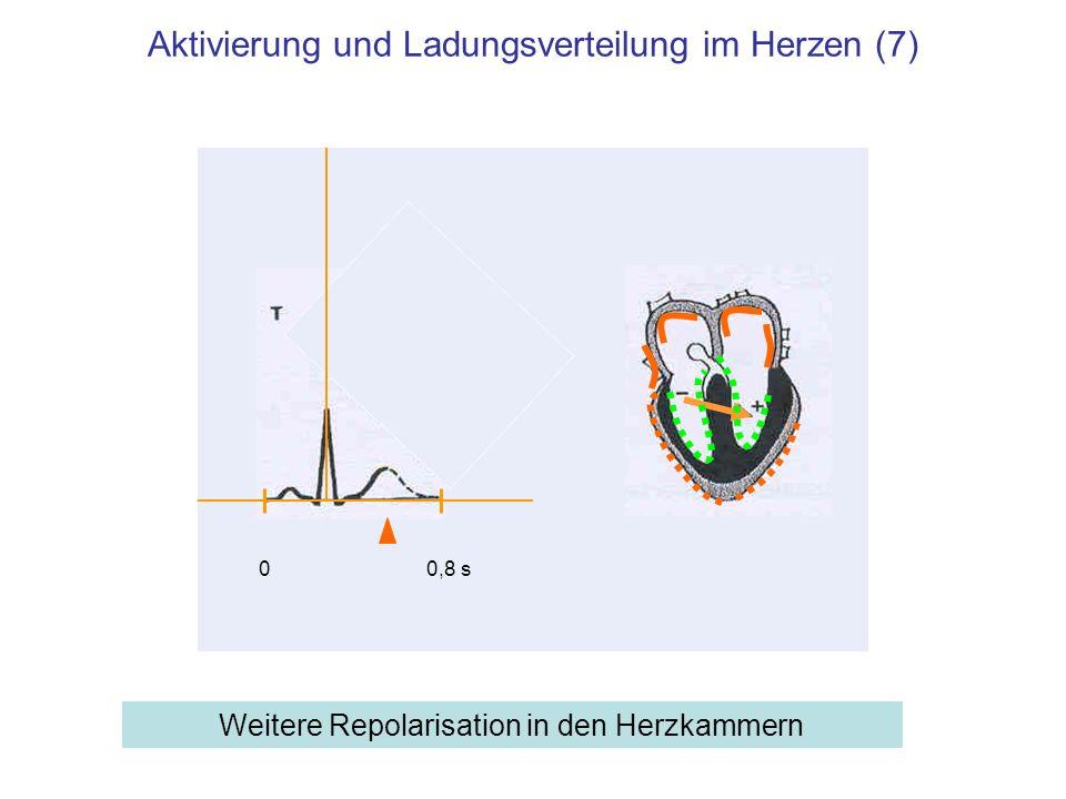 Aktivierung und Ladungsverteilung im Herzen (7)