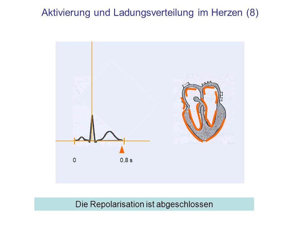 Aktivierung und Ladungsverteilung im Herzen (8)