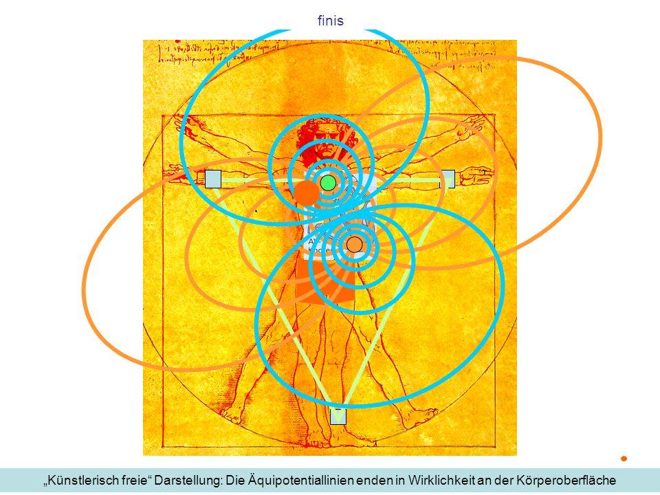 """finis""""Künstlerisch freie Darstellung: Die Äquipotentiallinien enden in Wirklichkeit an der Körperoberfläche."""