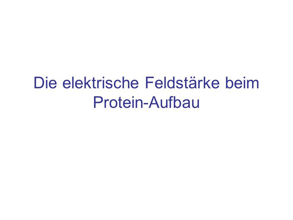 Die elektrische Feldstärke beim Protein-Aufbau