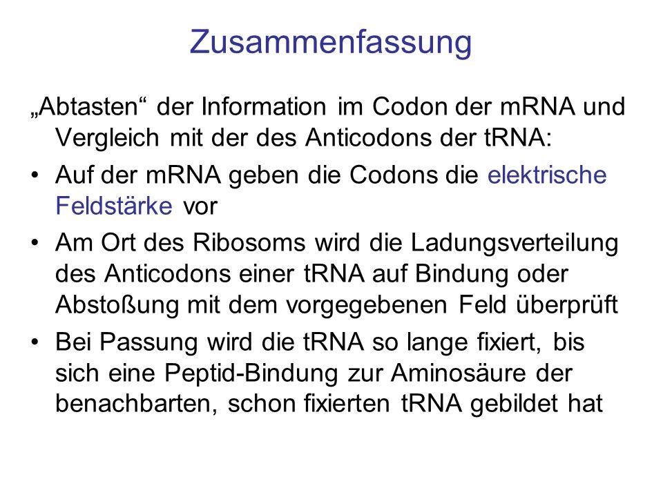 """Zusammenfassung """"Abtasten der Information im Codon der mRNA und Vergleich mit der des Anticodons der tRNA:"""
