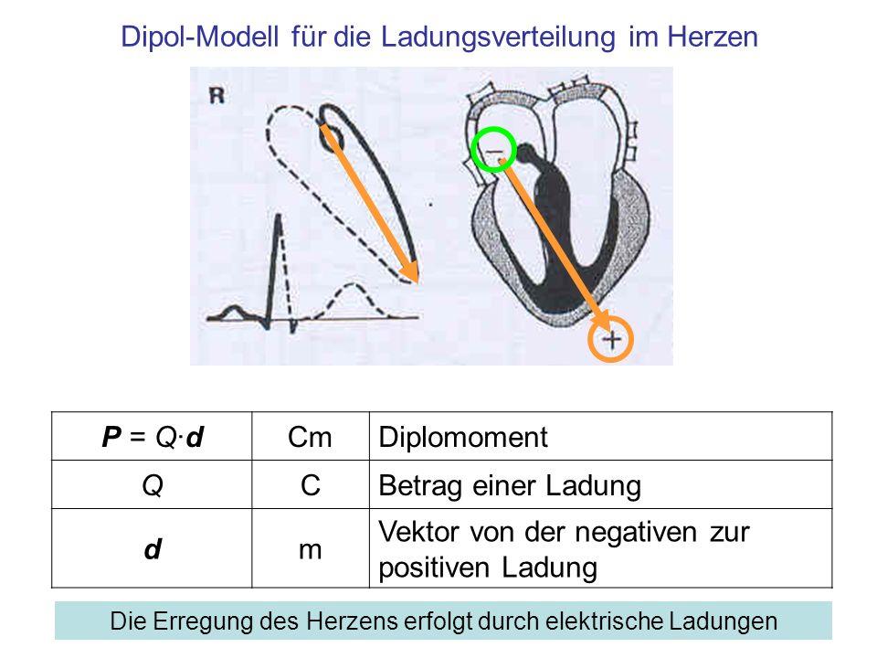 Dipol-Modell für die Ladungsverteilung im Herzen