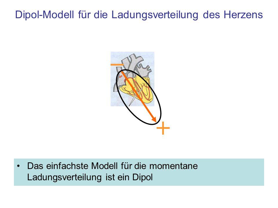 Dipol-Modell für die Ladungsverteilung des Herzens