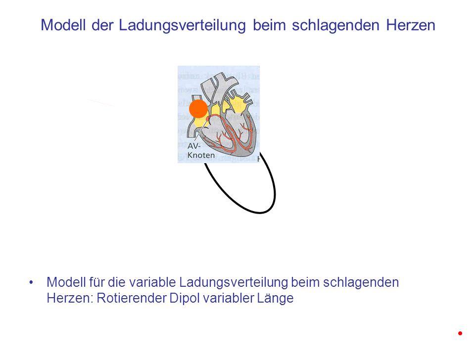 Modell der Ladungsverteilung beim schlagenden Herzen