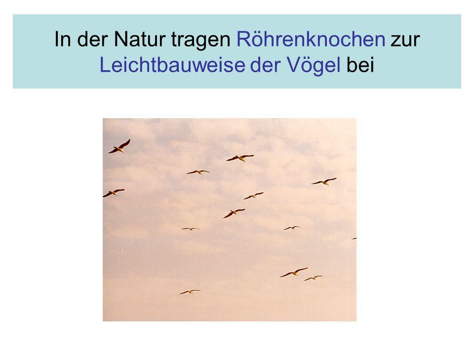 In der Natur tragen Röhrenknochen zur Leichtbauweise der Vögel bei