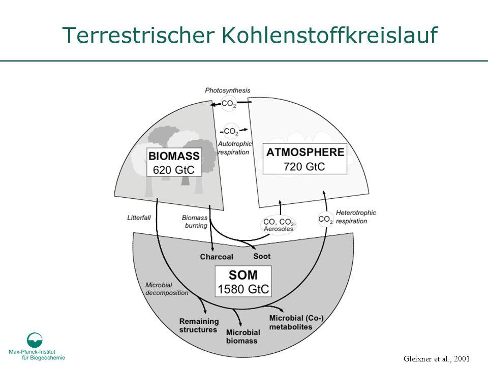 Terrestrischer Kohlenstoffkreislauf