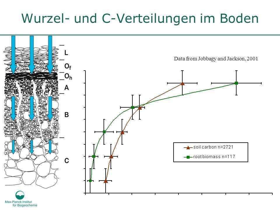 Wurzel- und C-Verteilungen im Boden