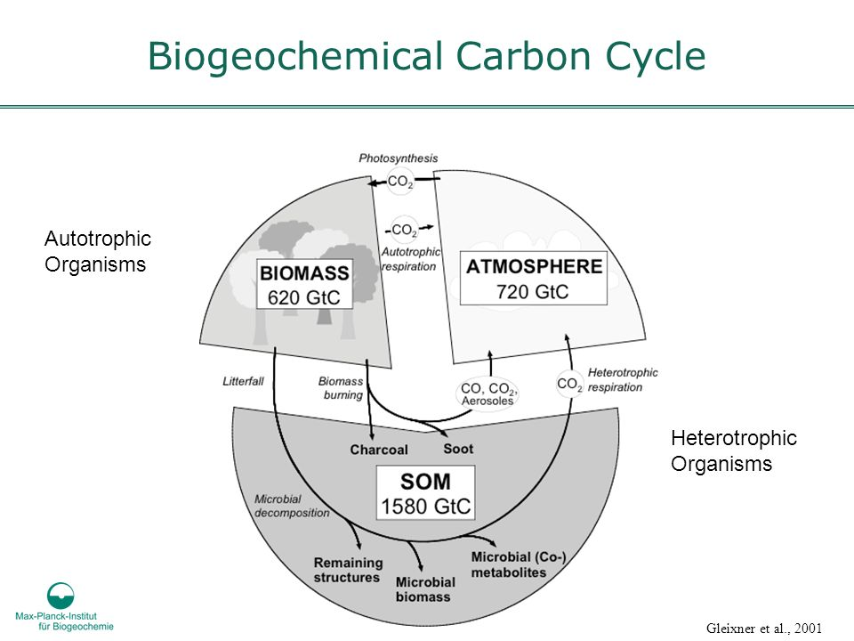 Biogeochemical Carbon Cycle