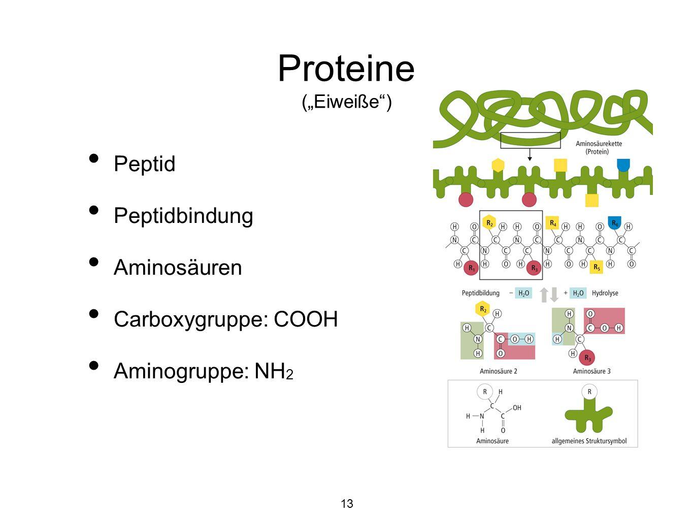 "Proteine (""Eiweiße ) Peptid Peptidbindung Aminosäuren"
