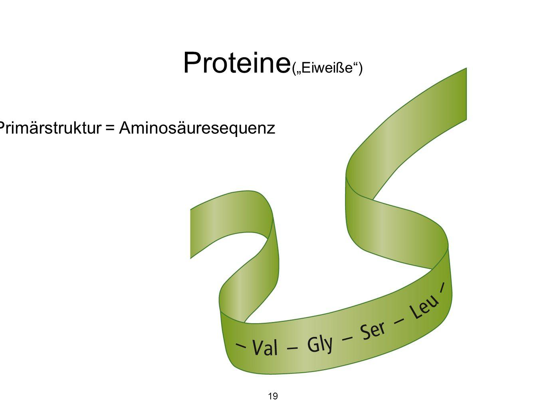 """Proteine(""""Eiweiße ) Primärstruktur = Aminosäuresequenz 19"""