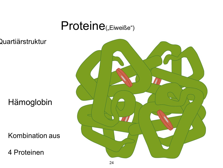 """Proteine(""""Eiweiße ) Hämoglobin Quartiärstruktur Kombination aus"""