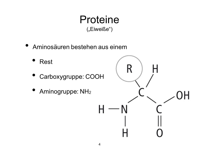 """Proteine (""""Eiweiße ) Aminosäuren bestehen aus einem Rest"""