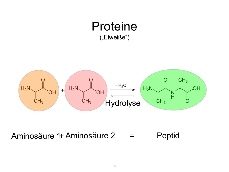 """Proteine (""""Eiweiße ) Aminosäure 1 + Aminosäure 2 Peptid = Hydrolyse 9"""